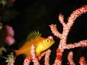 19.珊瑚にKiss